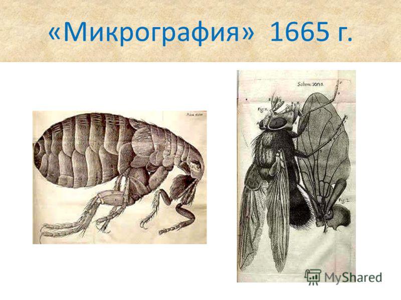 «Микрография» 1665 г.
