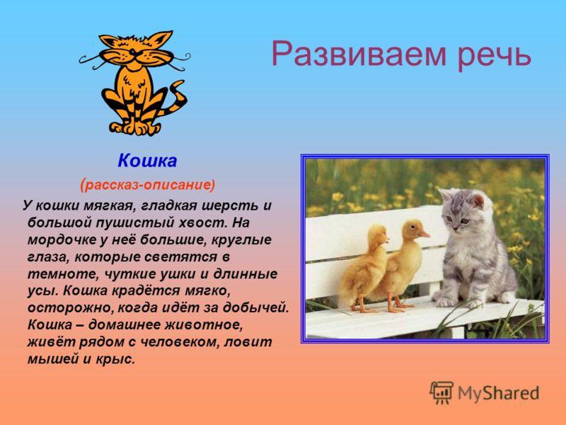 Развиваем речь Кошка ( рассказ-описание) У кошки мягкая, гладкая шерсть и большой пушистый хвост. На мордочке у неё большие, круглые глаза, которые светятся в темноте, чуткие ушки и длинные усы. Кошка крадётся мягко, осторожно, когда идёт за добычей.