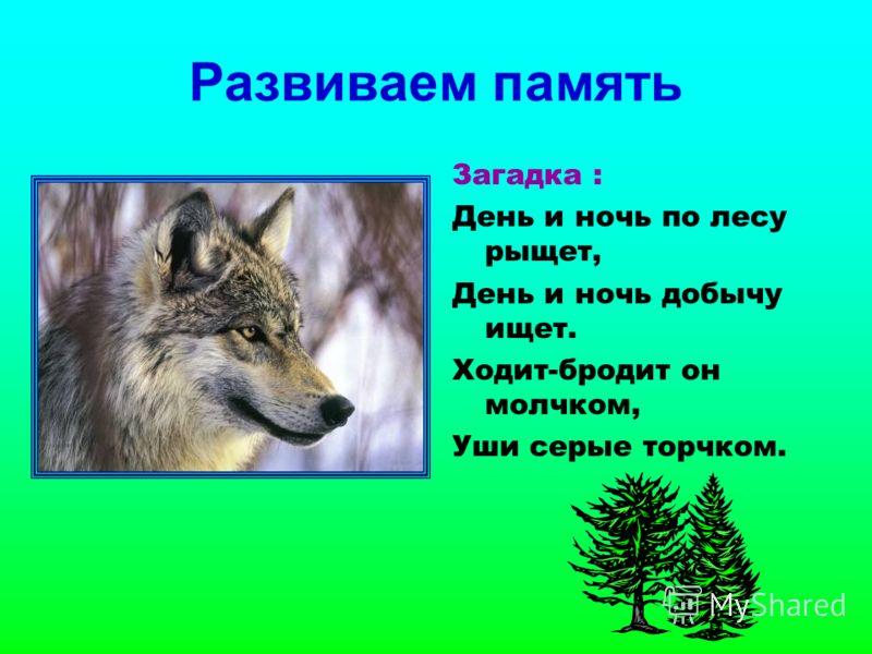 Развиваем память Загадка : День и ночь по лесу рыщет, День и ночь добычу ищет. Ходит-бродит он молчком, Уши серые торчком.