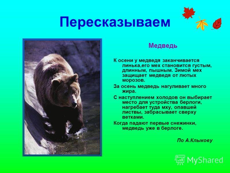 Пересказываем Медведь К осени у медведя заканчивается линька,его мех становится густым, длинным, пышным. Зимой мех защищает медведя от лютых морозов. За осень медведь нагуливает много жира. С наступлением холодов он выбирает место для устройства берл