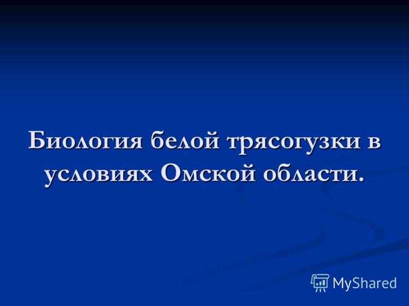 Биология белой трясогузки в условиях Омской области.