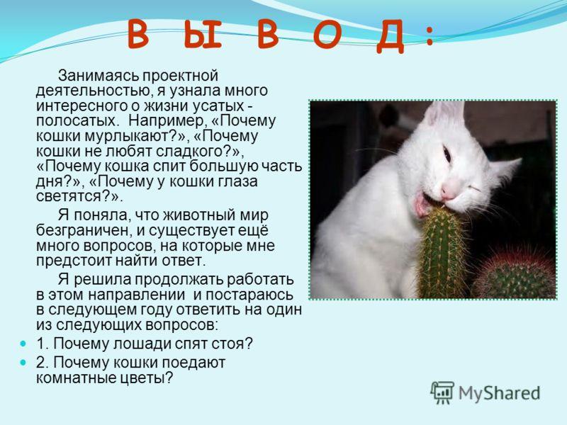 В Ы В О Д : Занимаясь проектной деятельностью, я узнала много интересного о жизни усатых - полосатых. Например, «Почему кошки мурлыкают?», «Почему кошки не любят сладкого?», «Почему кошка спит большую часть дня?», «Почему у кошки глаза светятся?». Я