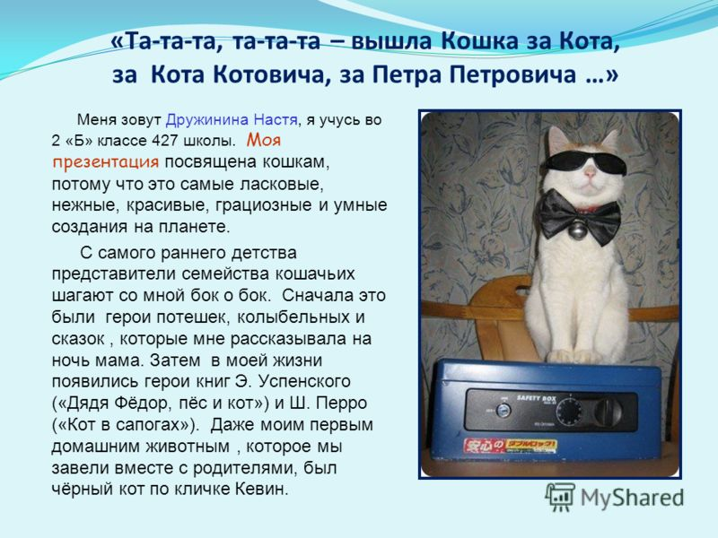 «Та-та-та, та-та-та – вышла Кошка за Кота, за Кота Котовича, за Петра Петровича …» Меня зовут Дружинина Настя, я учусь во 2 «Б» классе 427 школы. Моя презентация посвящена кошкам, потому что это самые ласковые, нежные, красивые, грациозные и умные со