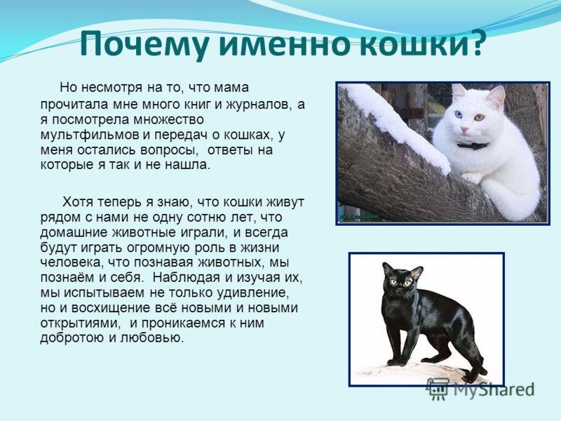 Почему именно кошки? Но несмотря на то, что мама прочитала мне много книг и журналов, а я посмотрела множество мультфильмов и передач о кошках, у меня остались вопросы, ответы на которые я так и не нашла. Хотя теперь я знаю, что кошки живут рядом с н