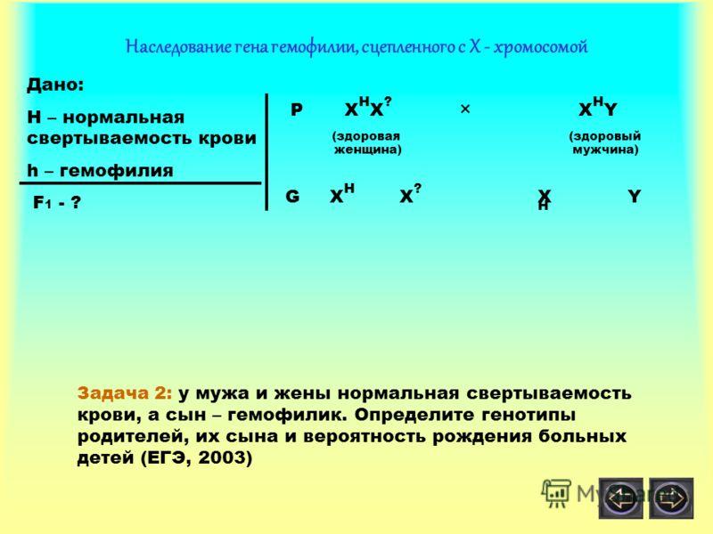 Наследование гена гемофилии, сцепленного с Х - хромосомой Дано: H – нормальная свертываемость крови h – гемофилия F 1 - ? P X H X ? × X H Y (здоровая (здоровый женщина) мужчина) X H X H X ? Y G Задача 2: у мужа и жены нормальная свертываемость крови,