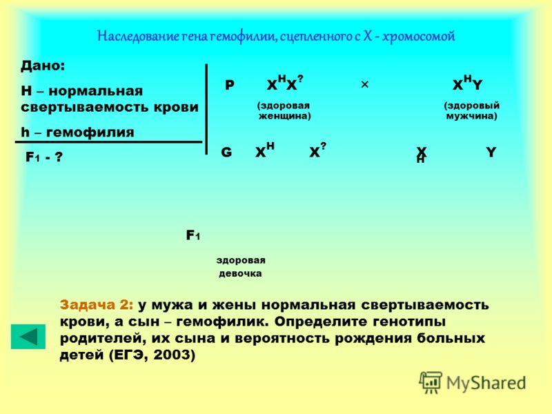 Наследование гена гемофилии, сцепленного с Х - хромосомой Дано: H – нормальная свертываемость крови h – гемофилия F 1 - ? P X H X ? × X H Y (здоровая (здоровый женщина) мужчина) XHXH XHXH X?X? YG здоровая девочка F1F1 Задача 2: у мужа и жены нормальн