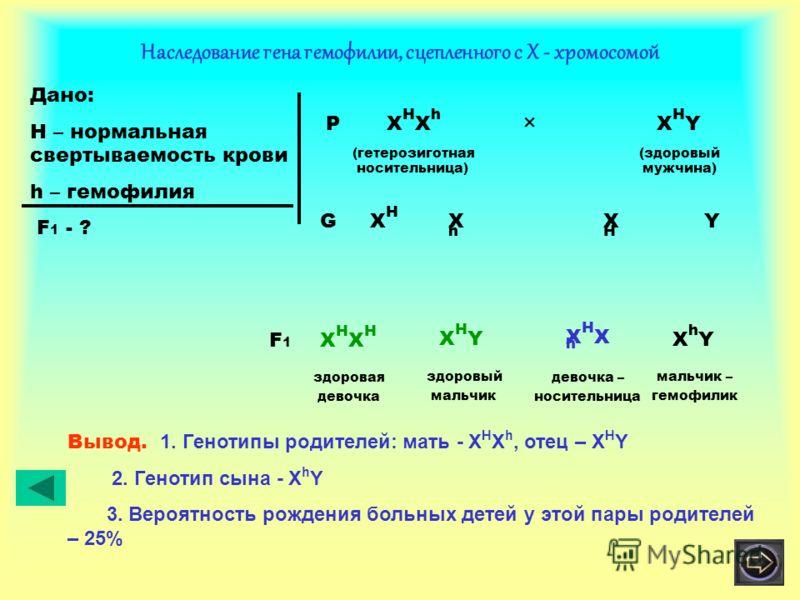 Наследование гена гемофилии, сцепленного с Х - хромосомой Дано: H – нормальная свертываемость крови h – гемофилия F 1 - ? P X H X h × X H Y (гетерозиготная (здоровый носительница) мужчина) XHXH XHXH XhXh YG здоровая девочка XHXHXHXH здоровый мальчик