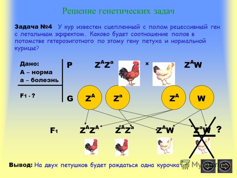 Решение генетических задач Задача 4 У кур известен сцепленный с полом рецессивный ген с летальным эффектом. Каково будет соотношение полов в потомстве гетерозиготного по этому гену петуха и нормальной курицы? Дано: А – норма а – болезнь F 1 - ? PZAZa