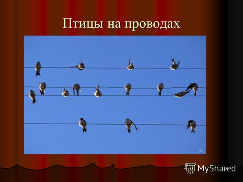 29 Птицы на проводах
