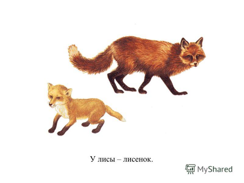 У лисы – лисенок.
