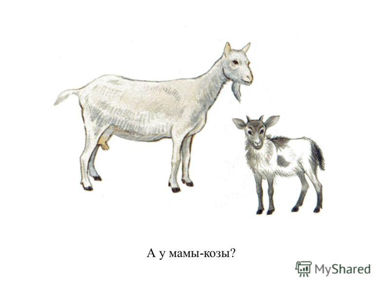 А у мамы-козы?