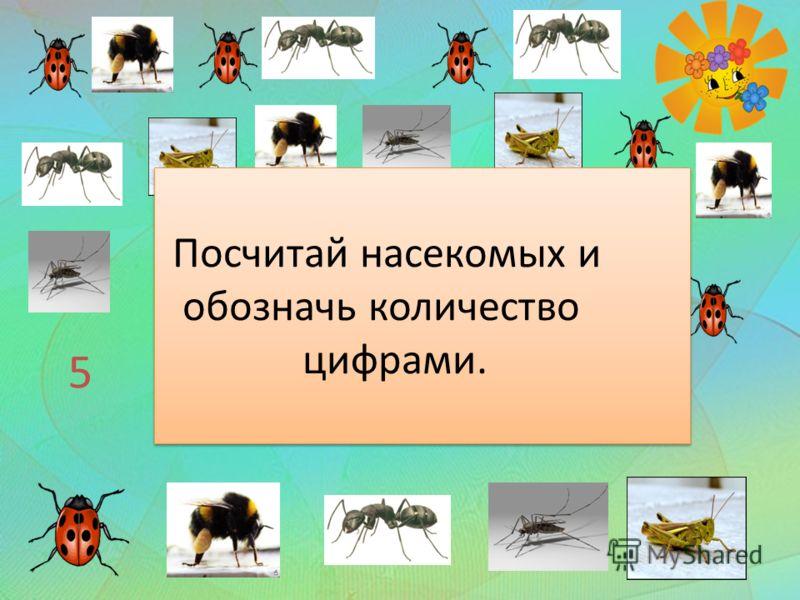 5 6 3 2 4 Посчитай насекомых и обозначь количество цифрами. Посчитай насекомых и обозначь количество цифрами.