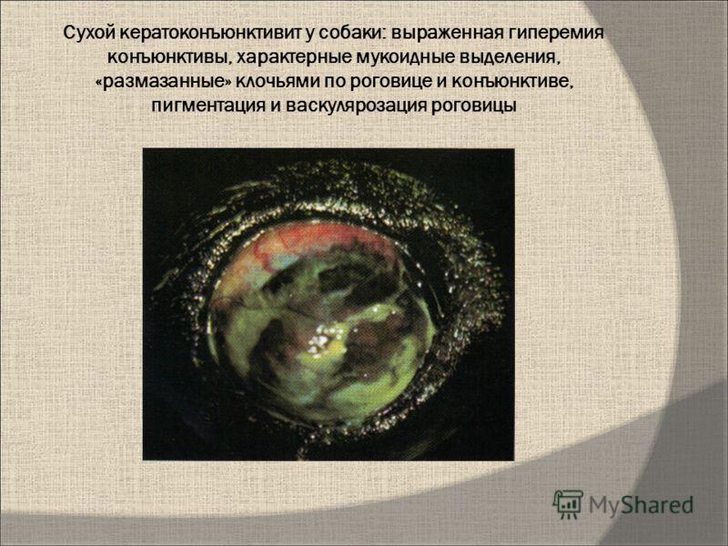 Сухой кератоконъюнктивит у собаки: выраженная гиперемия конъюнктивы, характерные мукоидные выделения, «размазанные» клочьями по роговице и конъюнктиве, пигментация и васкулярозация роговицы