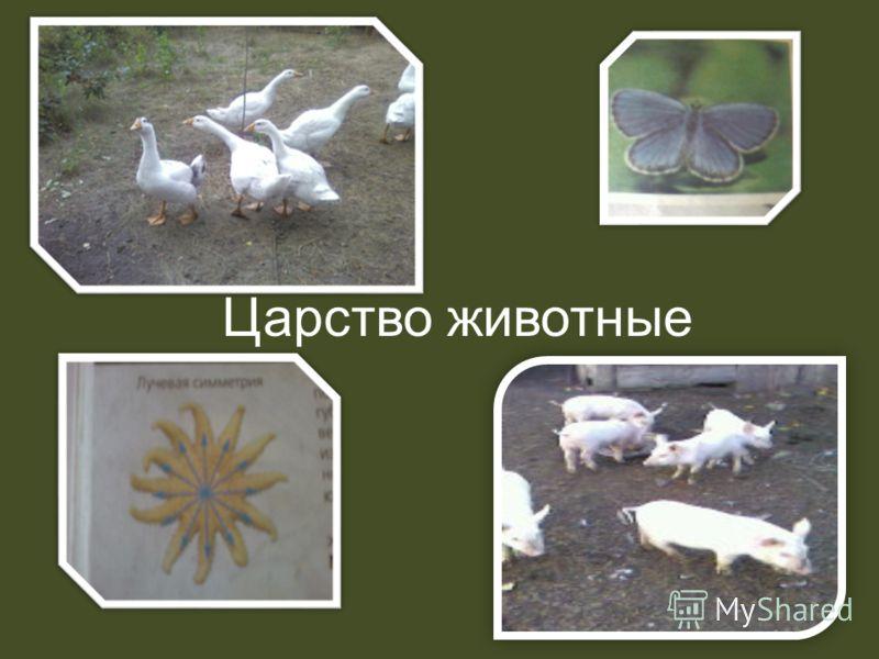 Царство животные зоология 1