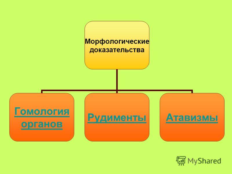 Морфологические доказательства Гомология органов РудиментыАтавизмы