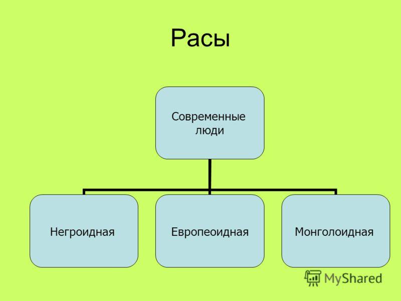 Расы Современные люди НегроиднаяЕвропеоиднаяМонголоидная