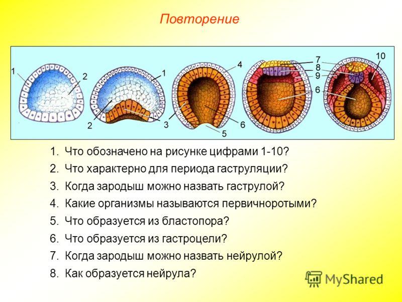 Повторение 1.Что обозначено на рисунке цифрами 1-10? 2.Что характерно для периода гаструляции? 3.Когда зародыш можно назвать гаструлой? 4.Какие организмы называются первичноротыми? 5.Что образуется из бластопора? 6.Что образуется из гастроцели? 7.Ког