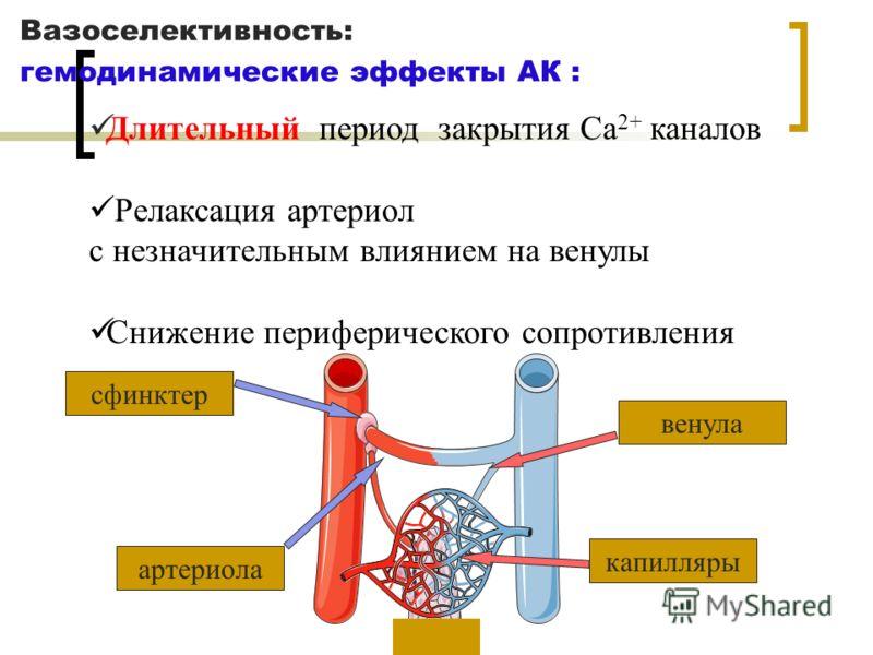 Вазоселективность: гемодинамические эффекты АК : артериола венула сфинктер капилляры Длительный период закрытия Ca 2+ каналов Релаксация артериол с незначительным влиянием на венулы Снижение периферического сопротивления