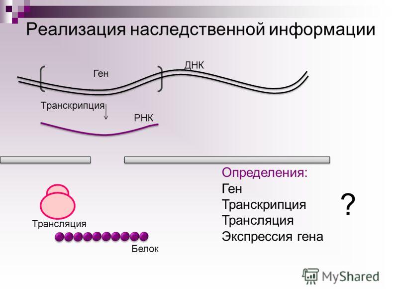 Ген ДНК РНК Транскрипция Белок Трансляция Определения: Ген Транскрипция Трансляция Экспрессия гена ? Реализация наследственной информации