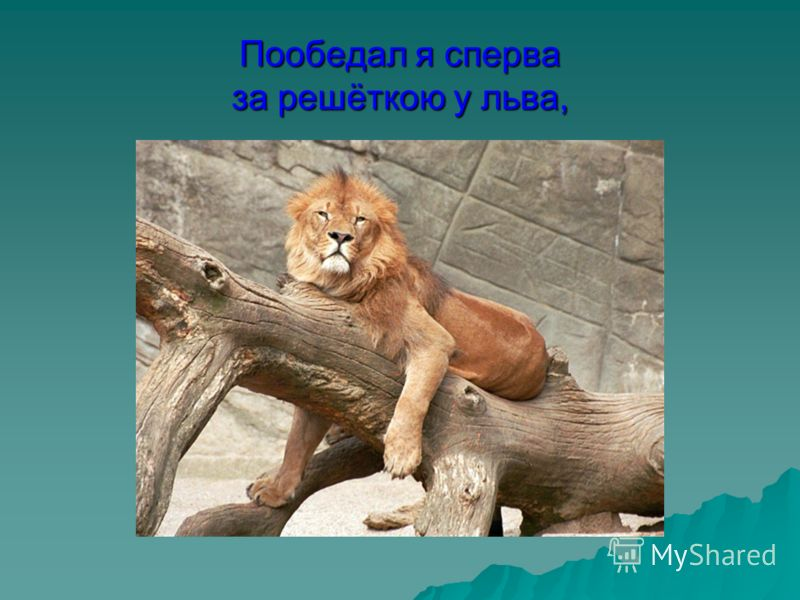 Пообедал я сперва за решёткою у льва,