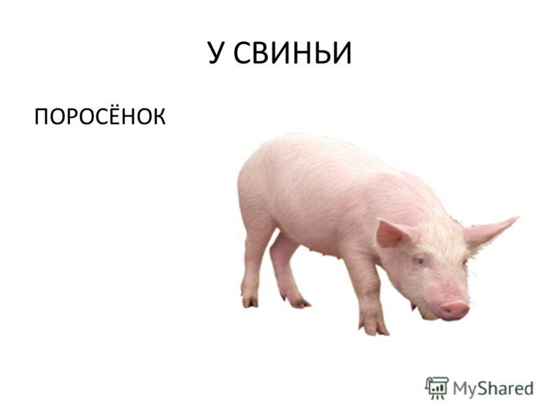 У СВИНЬИ ПОРОСЁНОК
