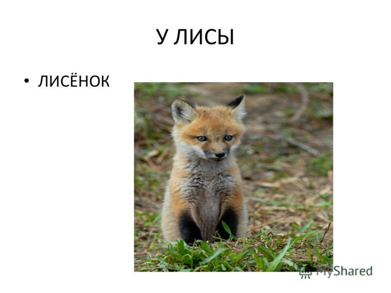 У ЛИСЫ ЛИСЁНОК
