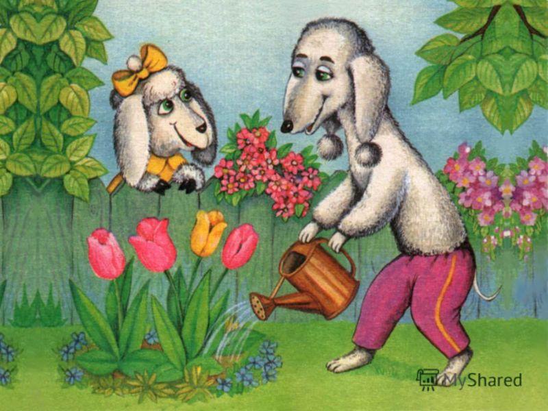 Ушки забавные У бедлингтона, Как у овечки, Но только с помпоном.