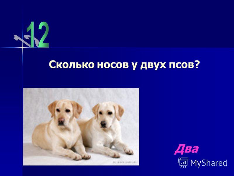 Сколько носов у двух псов? Два