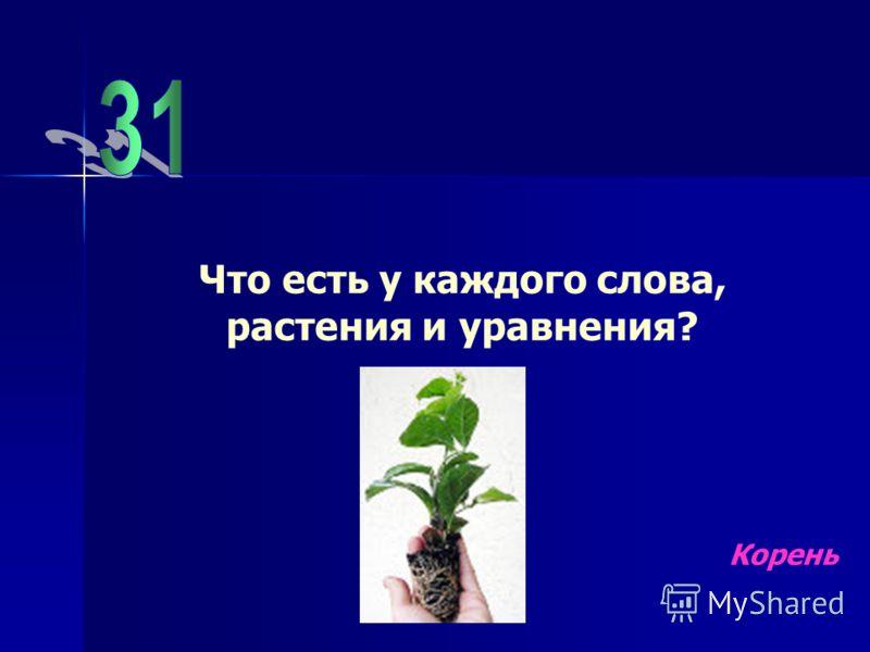 Что есть у каждого слова, растения и уравнения? Корень