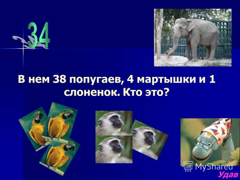 В нем 38 попугаев, 4 мартышки и 1 слоненок. Кто это? Удав