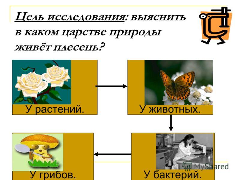 Плесень живой организм, потому что: Растёт Дышит Размножается Питается