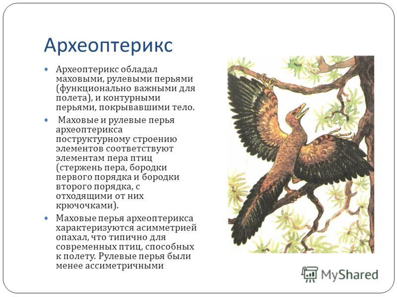 Презентация На Тему Археоптерикс