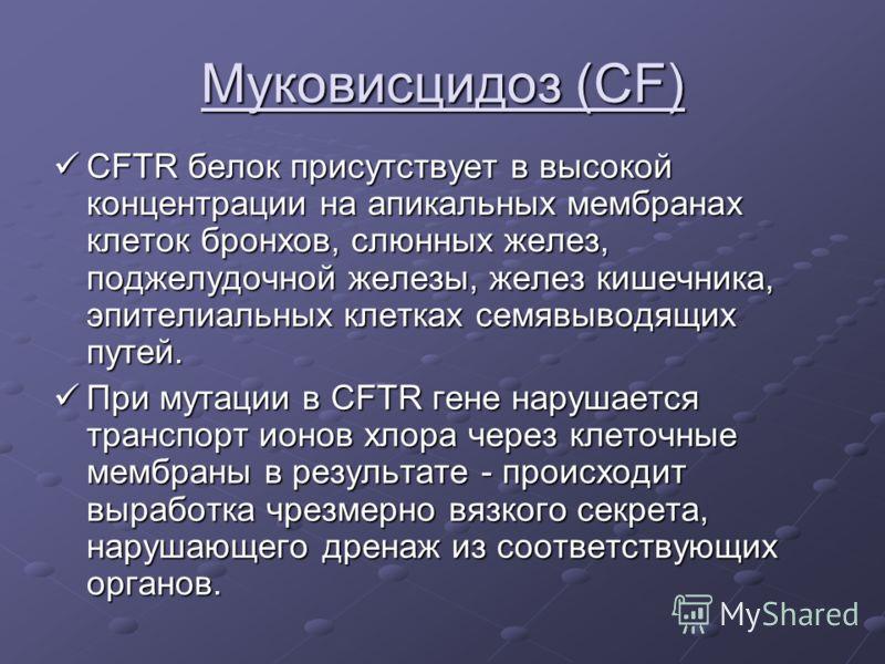 Муковисцидоз (CF) CFTR белок присутствует в высокой концентрации на апикальных мембранах клеток бронхов, слюнных желез, поджелудочной железы, желез кишечника, эпителиальных клетках семявыводящих путей. CFTR белок присутствует в высокой концентрации н
