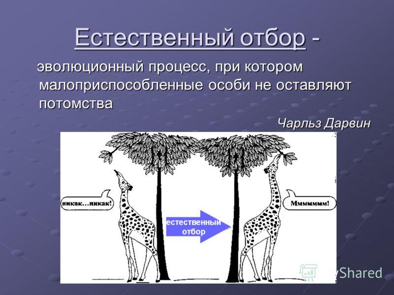 Естественный отбор - эволюционный процесс, при котором малоприспособленные особи не оставляют потомства эволюционный процесс, при котором малоприспособленные особи не оставляют потомства Чарльз Дарвин естественный отбор