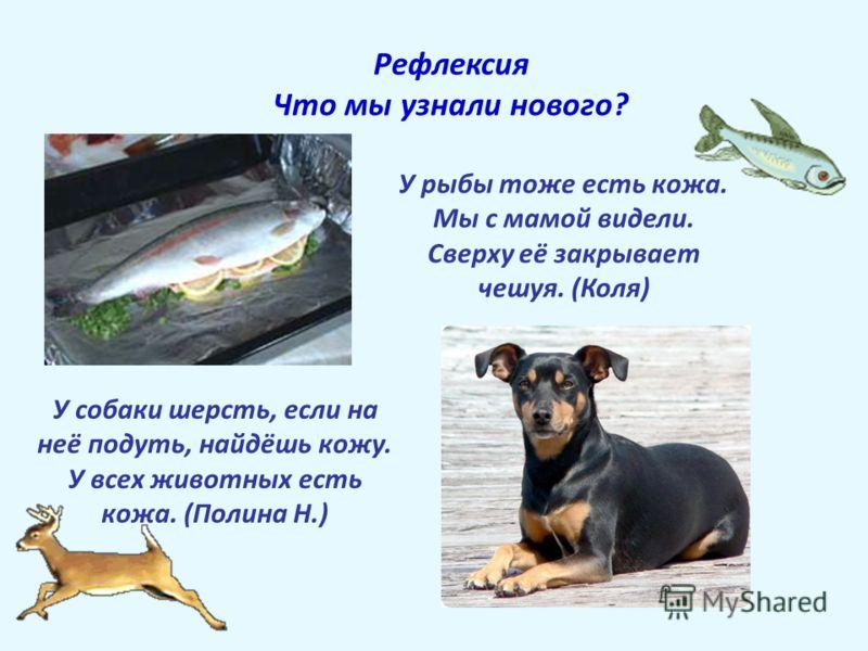 Рефлексия Что мы узнали нового? У рыбы тоже есть кожа. Мы с мамой видели. Сверху её закрывает чешуя. (Коля) У собаки шерсть, если на неё подуть, найдёшь кожу. У всех животных есть кожа. (Полина Н.)