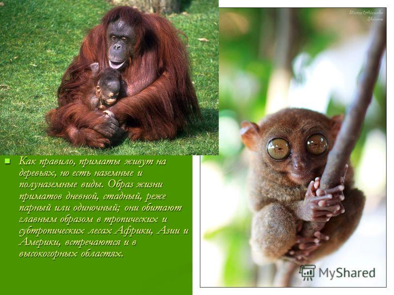 Как правило, приматы живут на деревьях, но есть наземные и полуназемные виды. Образ жизни приматов дневной, стадный, реже парный или одиночный; они обитают главным образом в тропических и субтропических лесах Африки, Азии и Америки, встречаются и в в