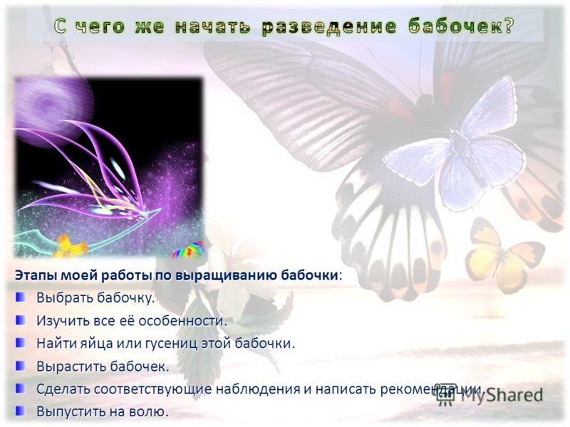 Этапы моей работы по выращиванию бабочки: Выбрать бабочку. Изучить все её особенности. Найти яйца или гусениц этой бабочки. Вырастить бабочек. Сделать соответствующие наблюдения и написать рекомендации. Выпустить на волю.