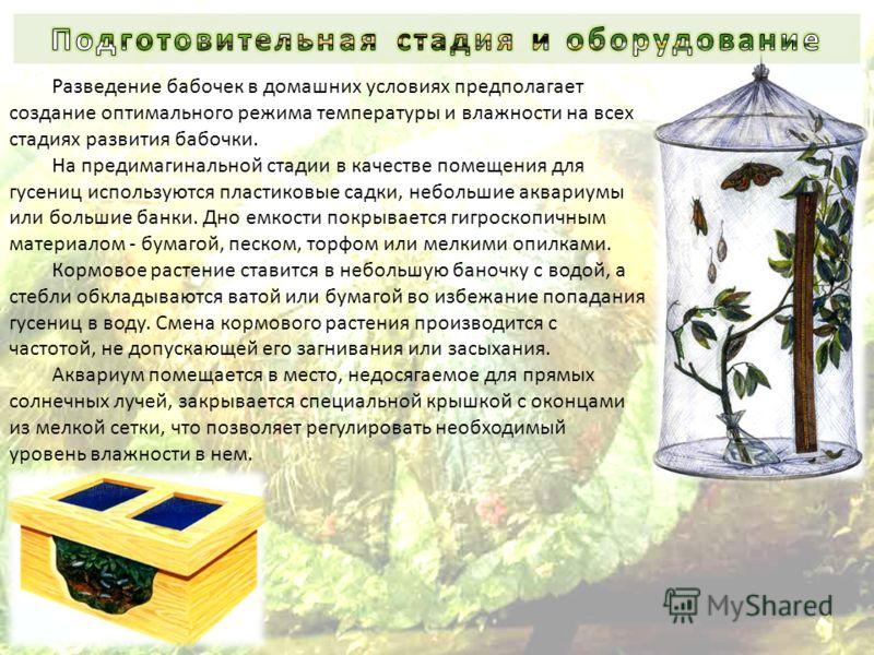 Разведение бабочек в домашних условиях предполагает создание оптимального режима температуры и влажности на всех стадиях развития бабочки. На предимагинальной стадии в качестве помещения для гусениц используются пластиковые садки, небольшие аквариумы