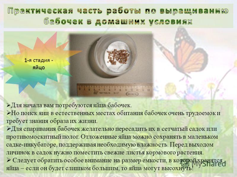 Для начала вам потребуются яйца бабочек. Но поиск яиц в естественных местах обитания бабочек очень трудоемок и требует знания образа их жизни. Для спаривания бабочек желательно пересадить их в сетчатый садок или противомоскитный полог. Отложенные яйц