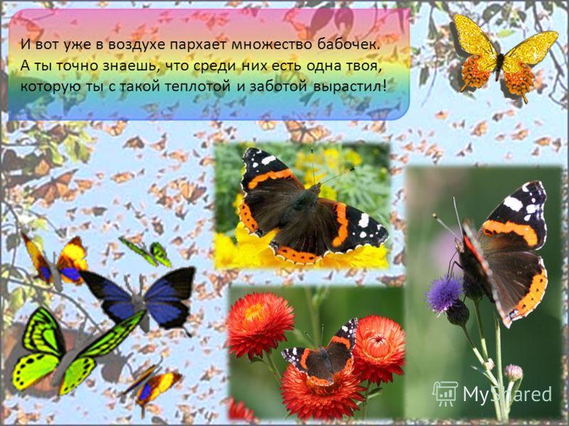 И вот уже в воздухе пархает множество бабочек. А ты точно знаешь, что среди них есть одна твоя, которую ты с такой теплотой и заботой вырастил!