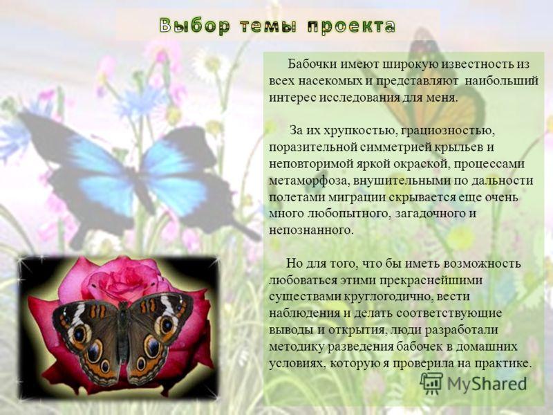 Бабочки имеют широкую известность из всех насекомых и представляют наибольший интерес исследования для меня. За их хрупкостью, грациозностью, поразительной симметрией крыльев и неповторимой яркой окраской, процессами метаморфоза, внушительными по дал