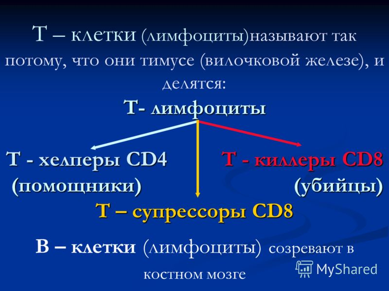Т- лимфоциты Т - хелперы СD4 Т - киллеры СD8 (помощники) (убийцы) Т – супрессоры СD8 Т – клетки (лимфоциты)называют так потому, что они тимусе (вилочковой железе), и делятся: Т- лимфоциты Т - хелперы СD4 Т - киллеры СD8 (помощники) (убийцы) Т – супре