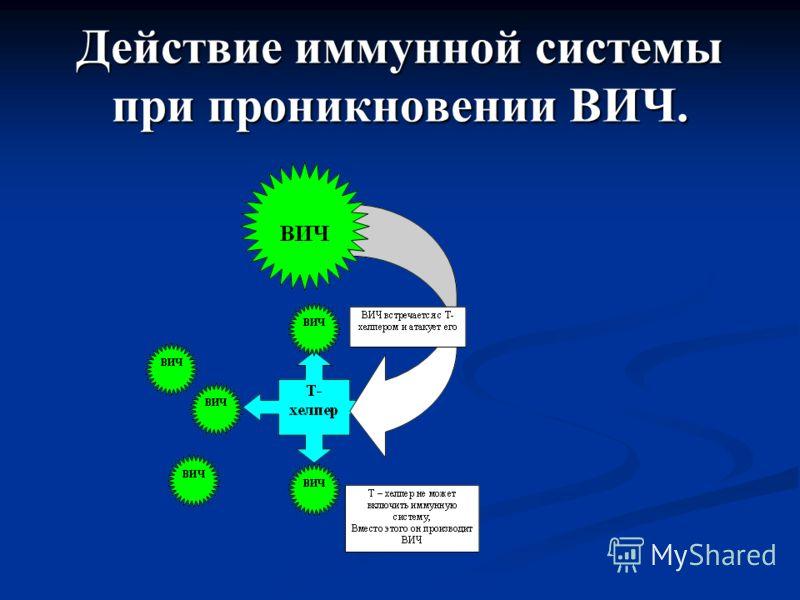 Действие иммунной системы при проникновении ВИЧ.