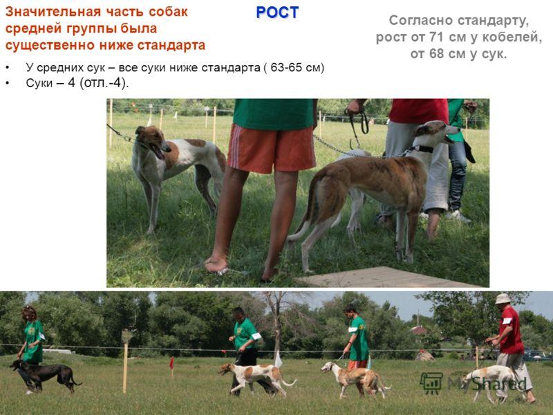 У средних сук – все суки ниже стандарта ( 63-65 см) Суки – 4 (отл.-4). Значительная часть собак средней группы была существенно ниже стандарта Согласно стандарту, рост от 71 см у кобелей, от 68 см у сук.РОСТ