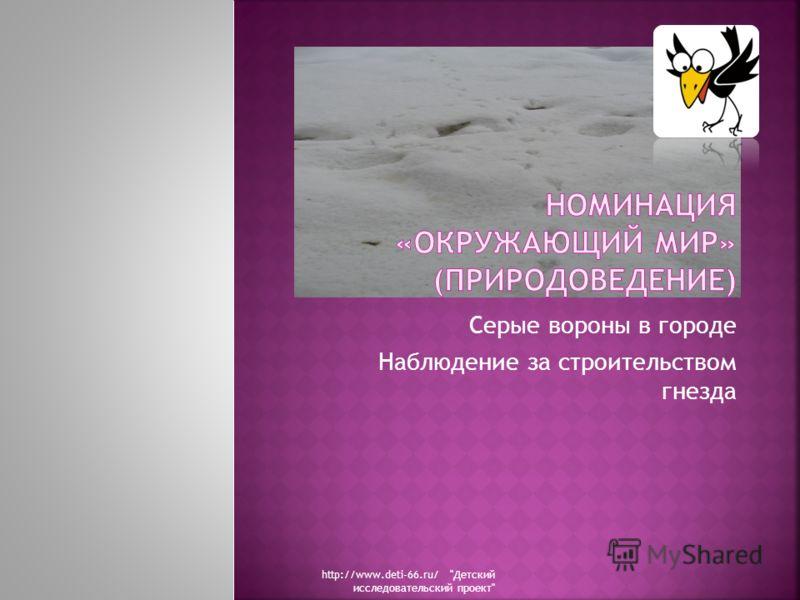 Серые вороны в городе Наблюдение за строительством гнезда http://www.deti-66.ru/ Детский исследовательский проект