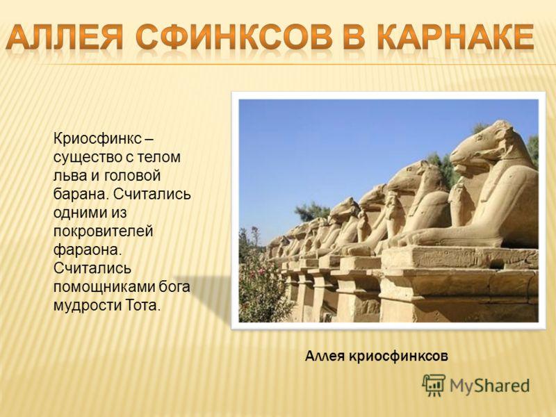Аллея криосфинксов Криосфинкс – существо с телом льва и головой барана. Считались одними из покровителей фараона. Считались помощниками бога мудрости Тота.