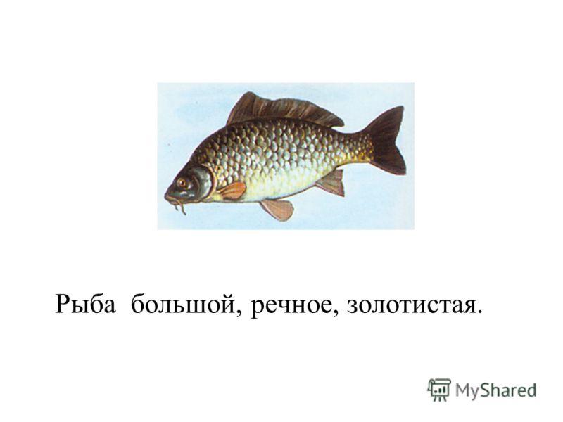 Рыба большой, речное, золотистая.