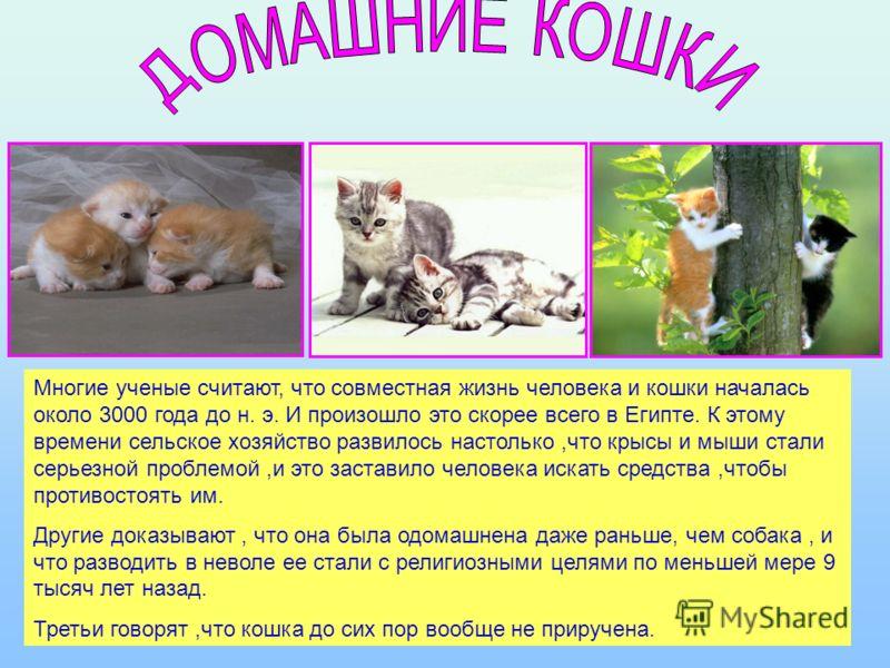 Многообразие кошачьих Г ЯГУАР ПАНТЕРА КАРАКАЛ СНЕЖНЫЙ БАРС П У М А