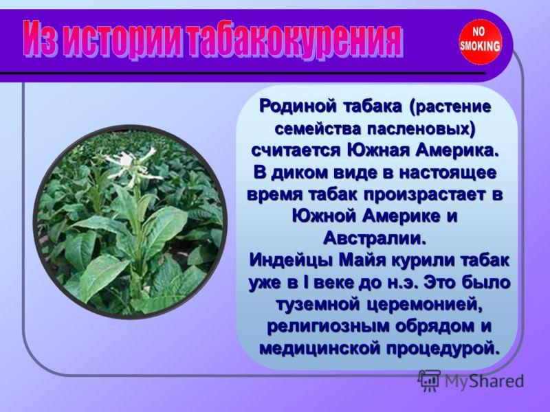 Родиной табака ( растение семейства пасленовых ) считается Южная Америка. В диком виде в настоящее время табак произрастает в Южной Америке и Австралии. Индейцы Майя курили табак уже в I веке до н.э. Это было туземной церемонией, религиозным обрядом