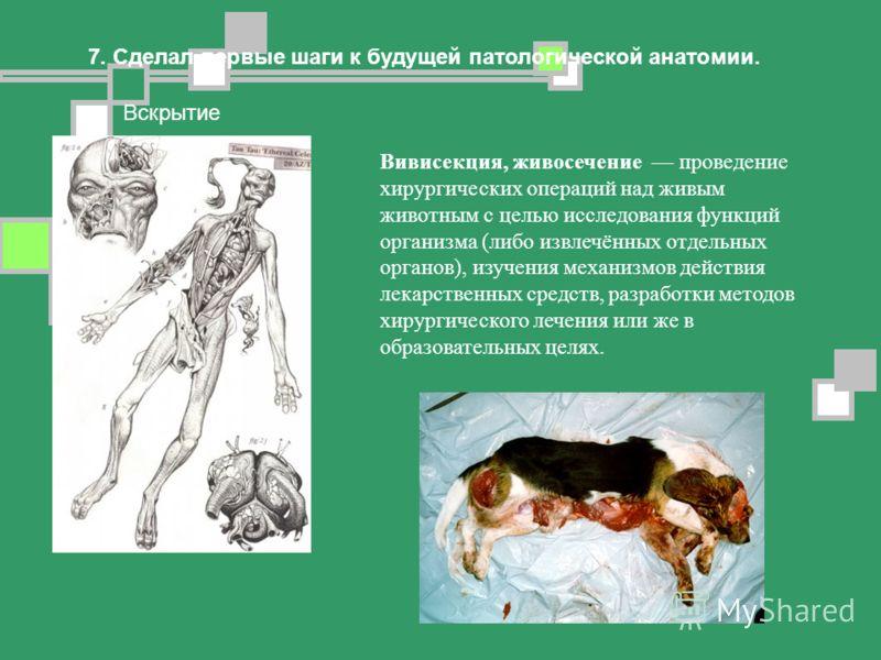 7. Сделал первые шаги к будущей патологической анатомии. Вскрытие Вивисекция, живосечение проведение хирургических операций над живым животным с целью исследования функций организма (либо извлечённых отдельных органов), изучения механизмов действия л